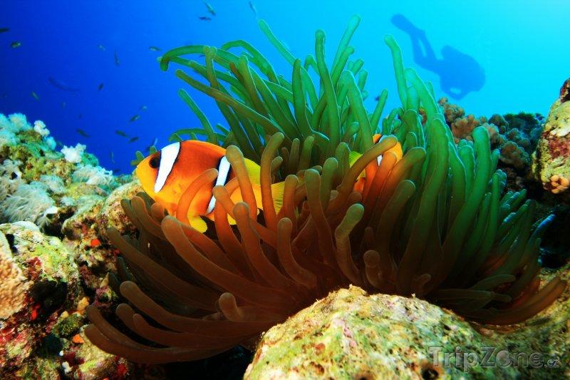 Fotka, Foto Dahab, podmořský život (Sinaj, Egypt)