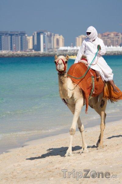 Fotka, Foto Dubaj, velbloud na pláži Jumeirah (Spojené arabské emiráty)