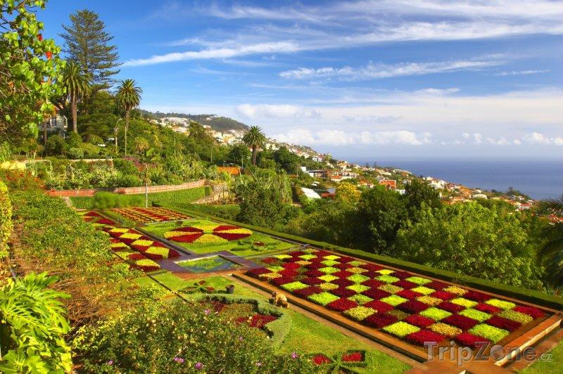 Fotka, Foto Funchal, botanická zahrada (Madeira, Portugalsko)