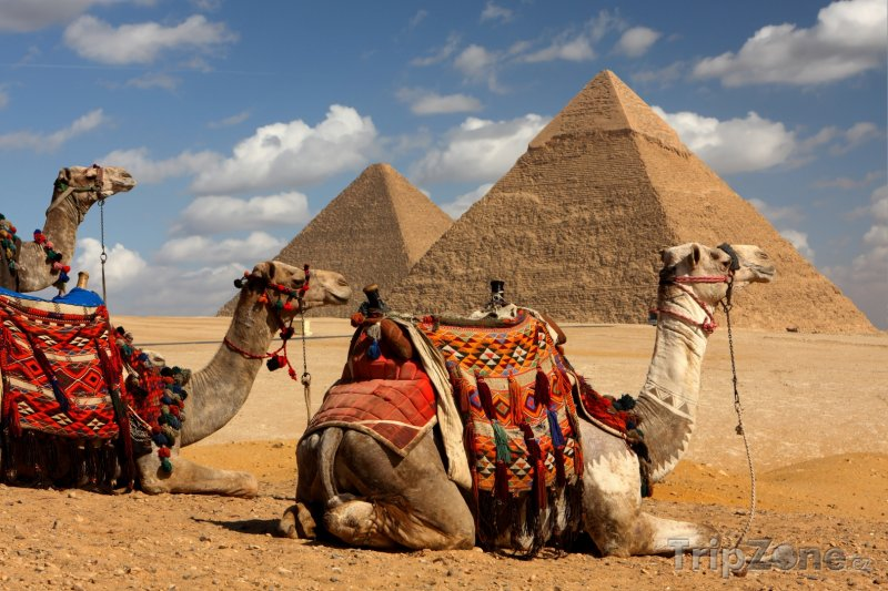 Fotka, Foto Gíza, velbloudi a pyramidy (Egypt)