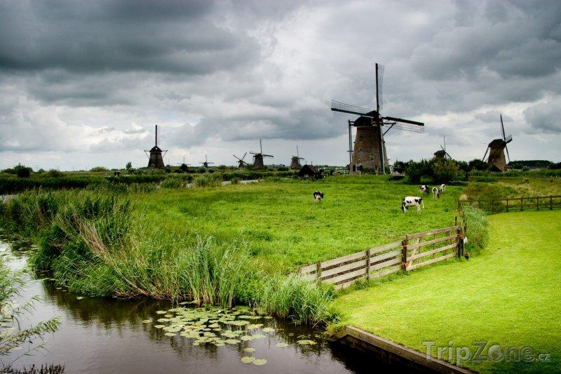 Fotka, Foto Krávy a mlýny v krajině (Nizozemsko)
