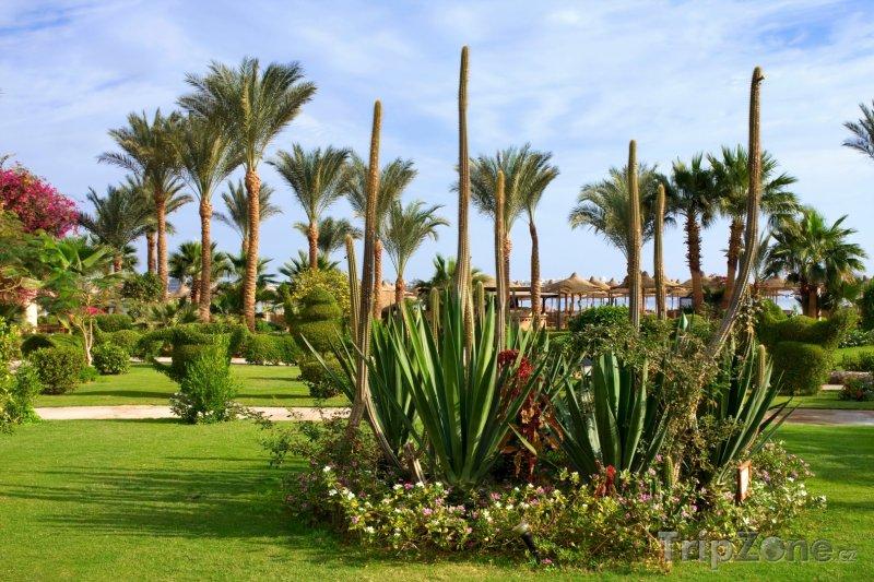 Fotka, Foto Makadi Bay (Východní pobřeží, Egypt)