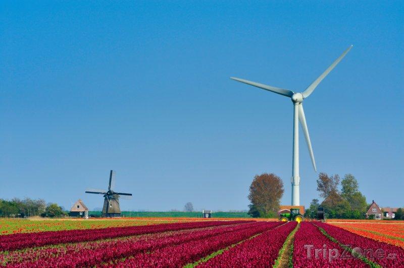 Fotka, Foto Nizozemský venkov (Nizozemsko)