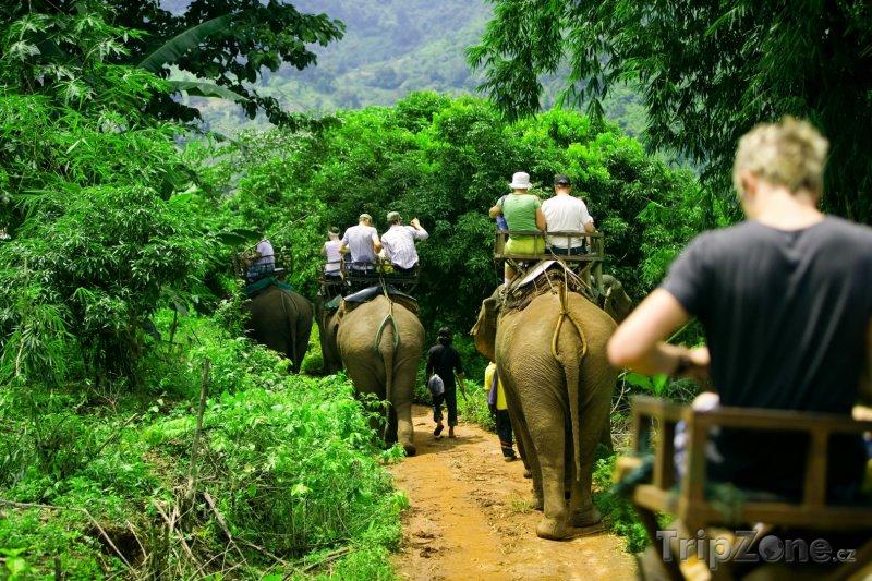 Fotka, Foto Turisté na slonech v džungli (Thajsko)