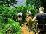 Turisté na slonech v džungli