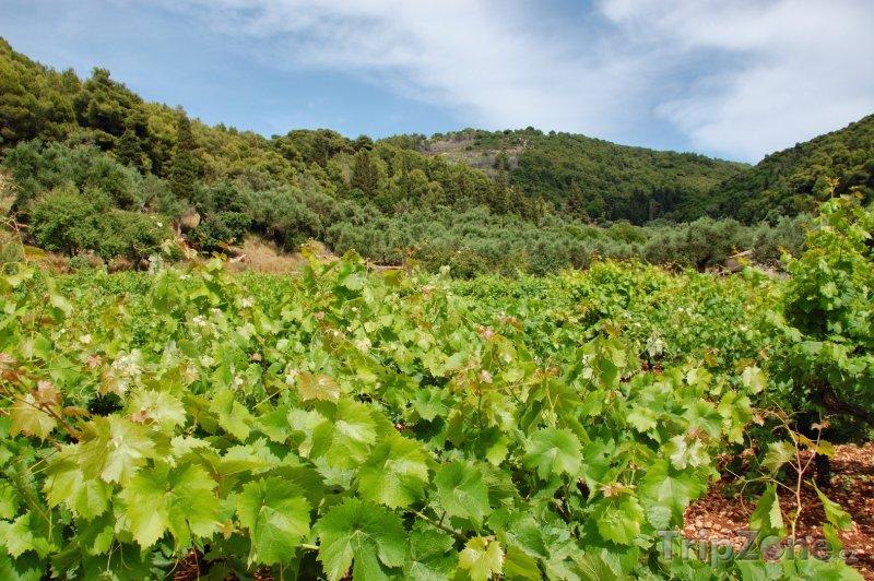 Fotka, Foto Vinice na ostrově Zakynthos (Zakynthos, Řecko)
