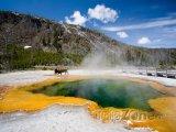 Yellowstonský národní park, bizon