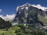 Alpské pahorky u obce Grindelwald