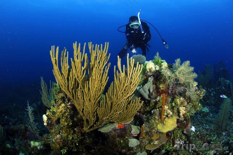 Fotka, Foto Bariéra Belize - potápění u korálového útesu (Belize)