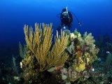 Bariéra Belize - potápění u korálového útesu