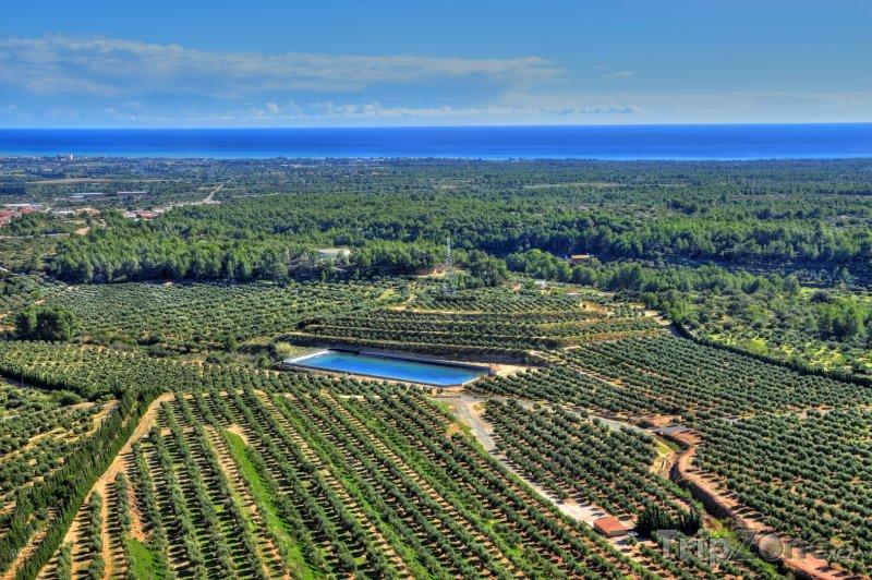 Fotka, Foto Costa Dorada - olivové sady (Costa Dorada, Španělsko)