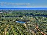 Costa Dorada - olivové sady