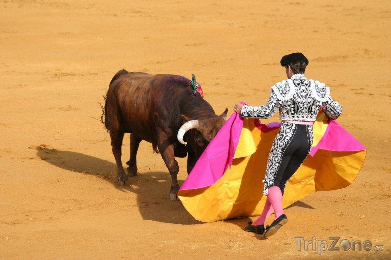 Fotka, Foto Korida v Seville - souboj toreadora s býkem (Španělsko)