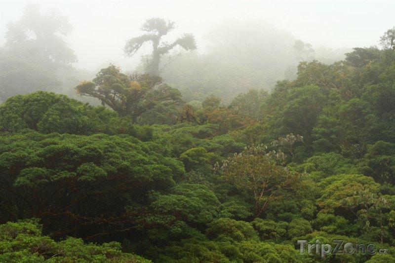 Fotka, Foto Mlžný les (Kostarika)