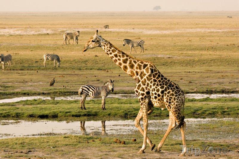Fotka, Foto Národní park Chobe v oblasti Ngamiland (Botswana)