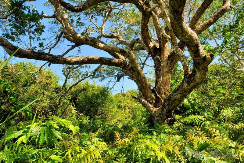 Fotka, Foto Národní park Sodwana Bay (Jihoafrická republika)