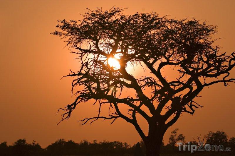 Fotka, Foto Ngamiland - rezervace Moremi Game (Botswana)