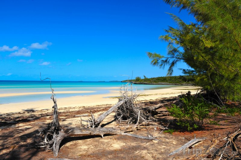 Fotka, Foto North Eleuthera - Harbour Island, Pink sand beach (Bahamy)