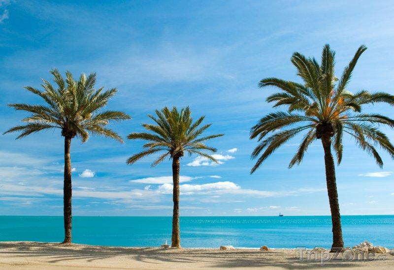Fotka, Foto Palmy na pobřeží Malagy (Španělsko)