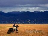 Patagonie, gaucho se řítí krajinou