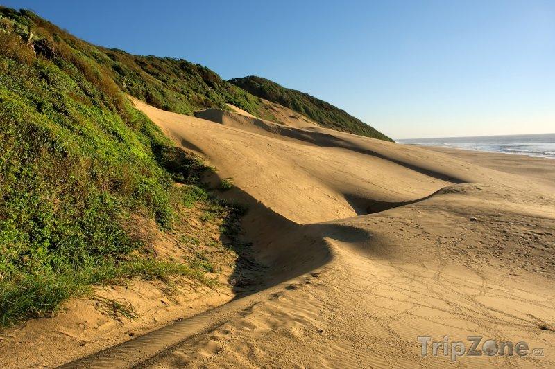 Fotka, Foto Písečná duna v národním parku Sodwana Bay (Jihoafrická republika)