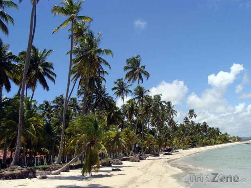 Fotka, Foto Pláž u města Carneiros (Brazílie)