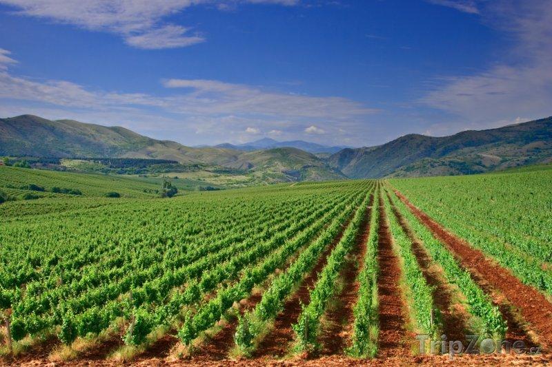 Fotka, Foto Pohled na úrodnou vinici (Makedonie)
