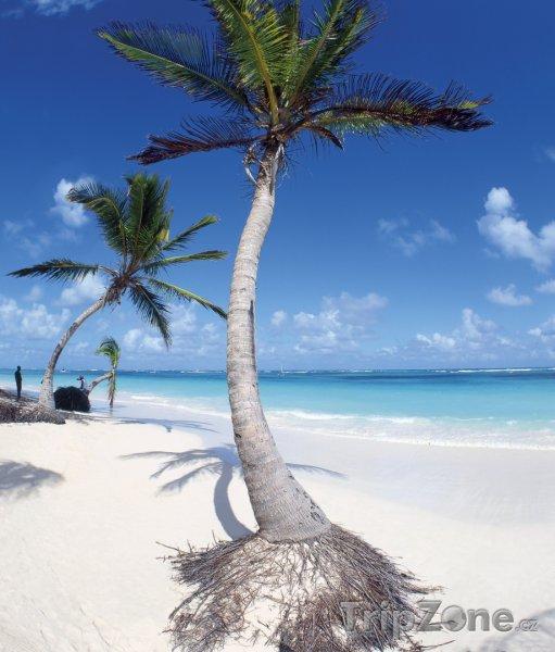 Fotka, Foto Punta Cana, pláž Bavaro (Dominikánská republika)