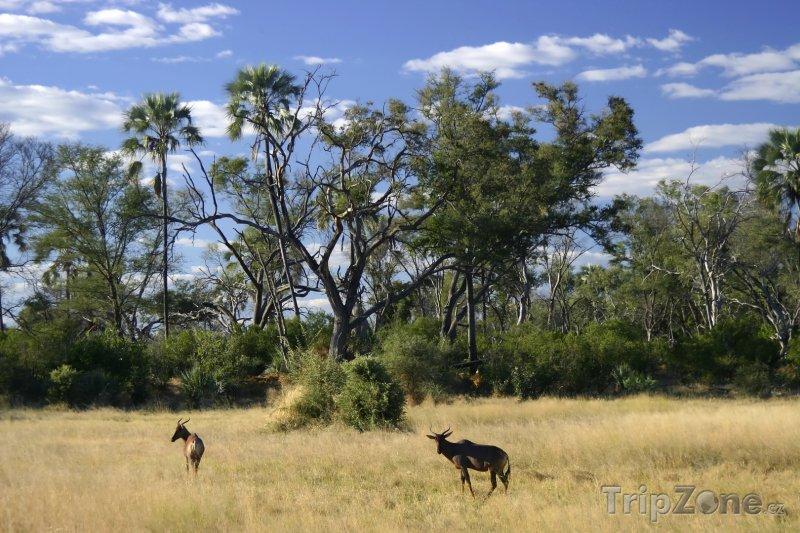 Fotka, Foto Savana v oblasti Kgalagadi (Botswana)