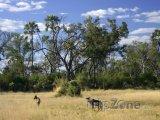 Savana v oblasti Kgalagadi