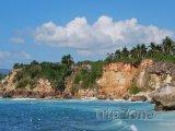 Skalní pobřeží s palmami