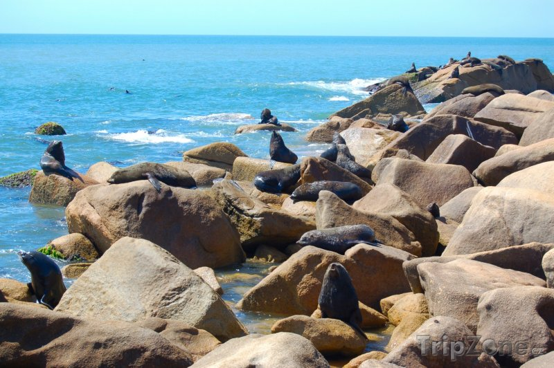 Fotka, Foto Tuleni na pobřeží u vesnice Cabo Polonio (Uruguay)