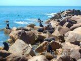 Tuleni na pobřeží u vesnice Cabo Polonio