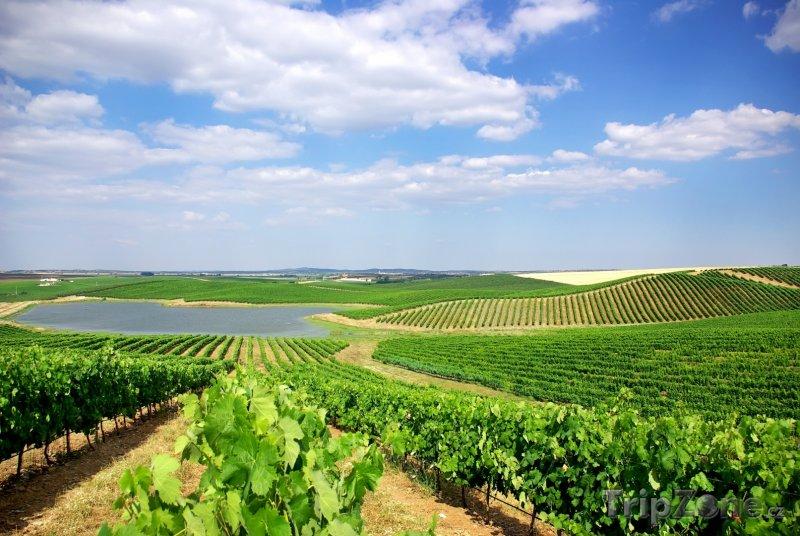 Fotka, Foto Vinice v oblasti Alentejo (Portugalsko)