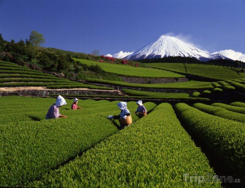 Fotka, Foto Čajové plantáže a hora Fudži (Japonsko)