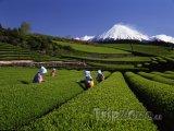 Čajové plantáže a hora Fudži