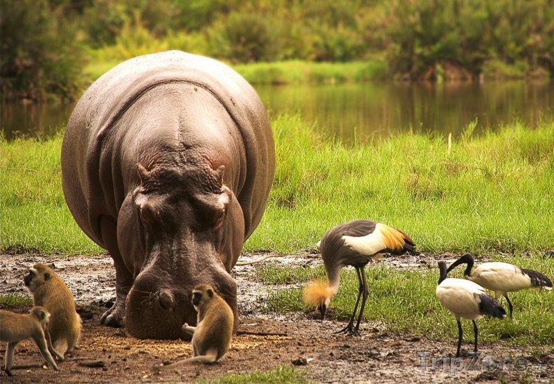 Fotka, Foto Divoká zvířata sdílejí potravu (Keňa)