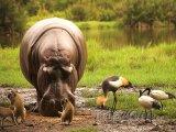 Divoká zvířata sdílejí potravu