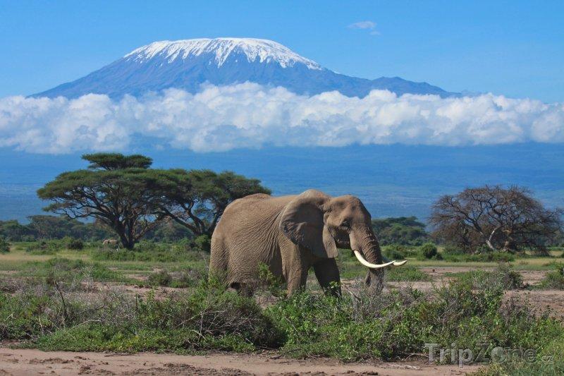 Fotka, Foto Dospělý slon, v pozadí zasněžené vrcholky hory Kilimandžáro (Keňa)