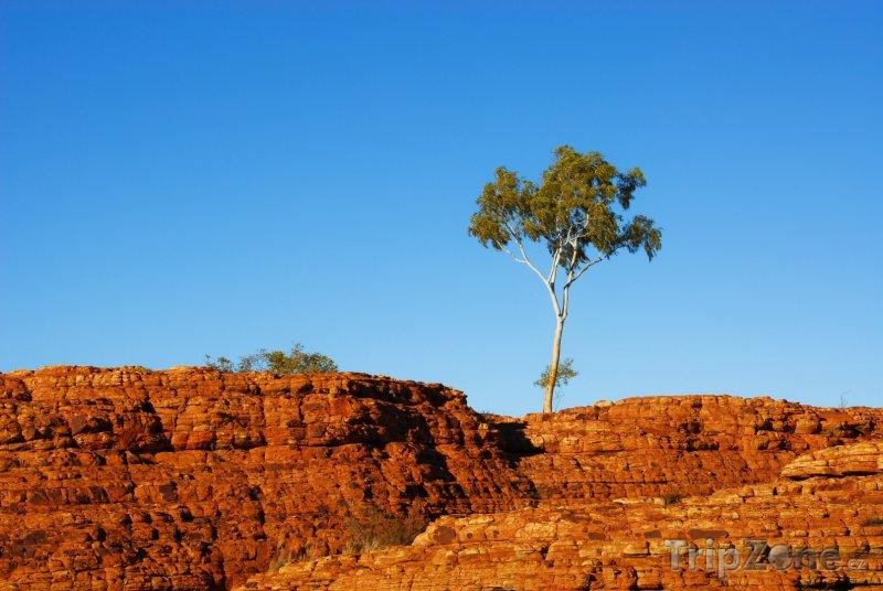 Fotka, Foto Kings Canyon v národním parku Watarrka (Austrálie)