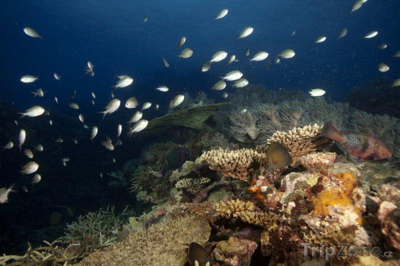 Fotka, Foto Korálový útes (Fidži)