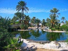 Krokodýlí farma na ostrově Djerba