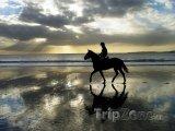 Kůň při západu slunce na pobřeží Atlantiku
