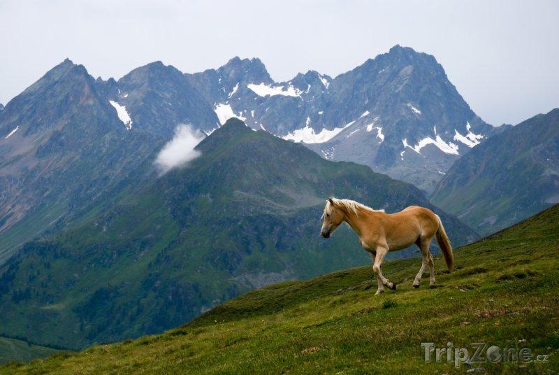 Fotka, Foto Kůň v rakouských Alpách (Rakouské Alpy, Rakousko)