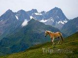 Kůň v rakouských Alpách