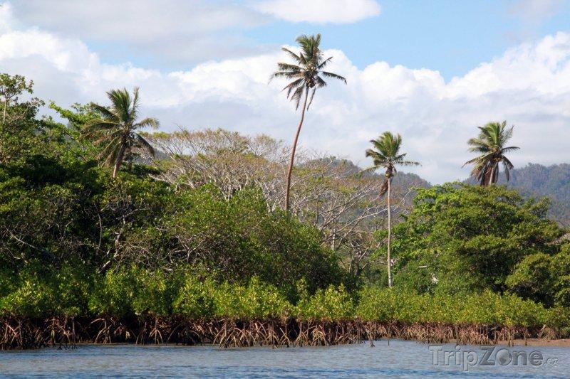 Fotka, Foto Mangrove na břehu řeky (Fidži)