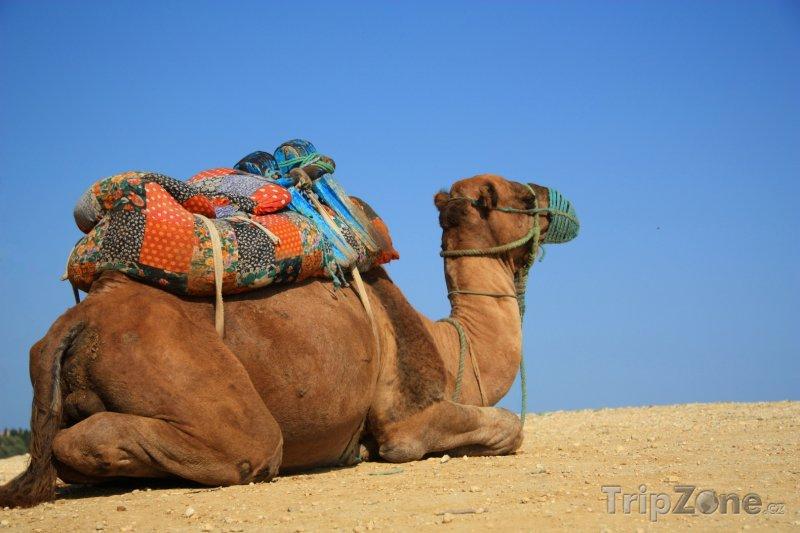 tunisko slovníček