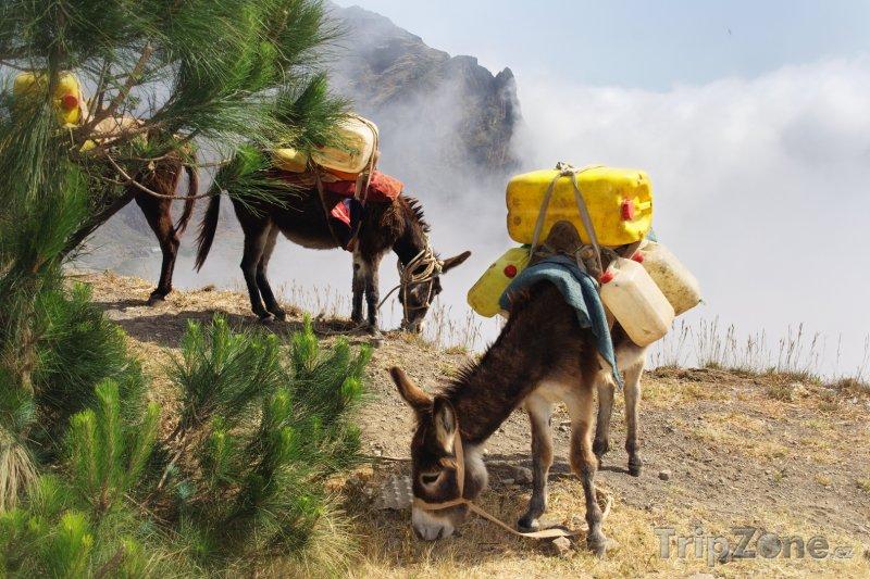 Fotka, Foto Osel nesoucí kanystry s vodou v mlžných horách (Kapverdy)