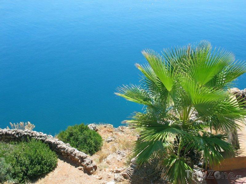 Fotka, Foto Palma na pobřeží poblíž Antalye (Turecká riviéra, Turecko)
