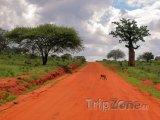 Pavián přebíhá silnici v Národním parku Východní Tsavo